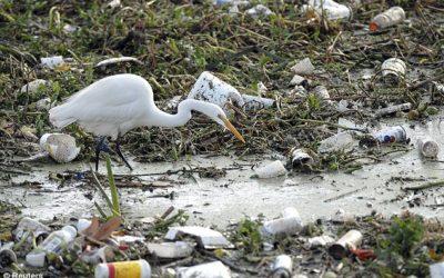 crane-among-trash1